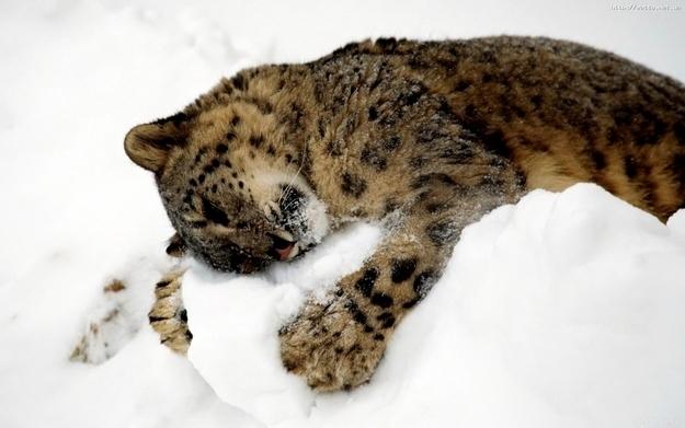 Snow Cuddles