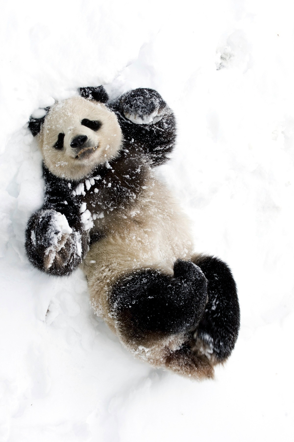 Community Post: 15 Animals That Are More Excited About The Snow Than You