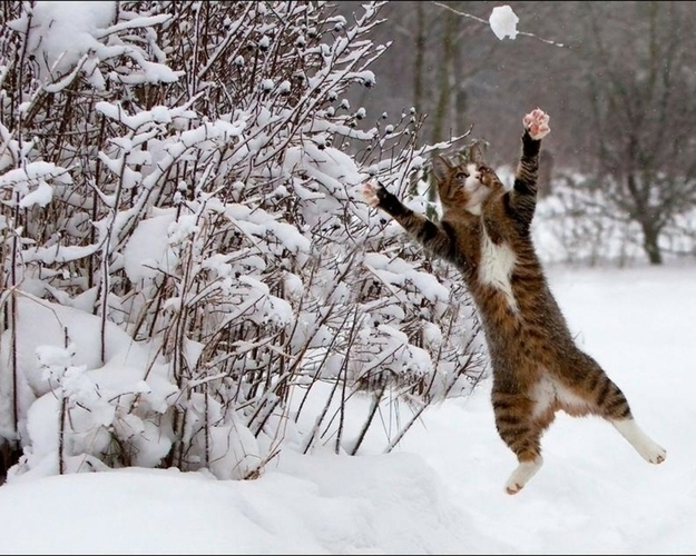 """""""I got it!"""""""